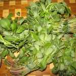 Wash, remove leaves from stems and gently dry purslane.