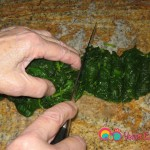 Coarsely chop the spinach about 1/2 inch thick.